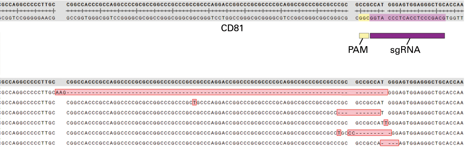 Identification of insertions and deletions (indels) in the CD81 gene after CRISPR/Cas9 targeting